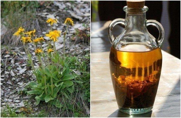 bienfaits de l'huile d'arnica