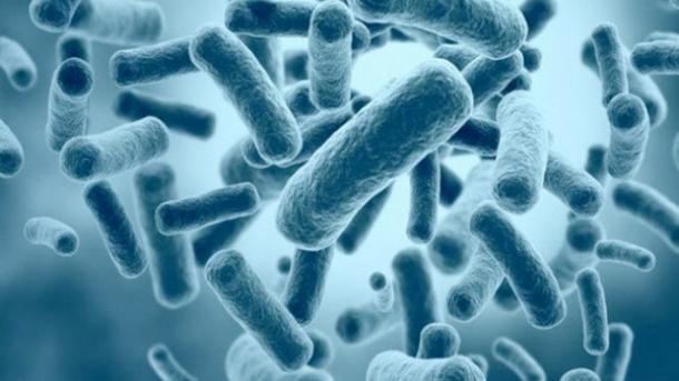 probiotique pour maigrir